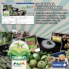 Rota do Cambuci agora nas redes sociais!