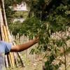 Cultivando frutíferas e inspirando a transformação local em Mogi das Cruzes