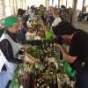 Começa nesta sexta o 10º Festival do Cambuci de Rio Grande da Serra