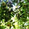 Seminário Agroecológico da Cultura do Cambuci lança luz sobre conhecimento do cultivo do fruto