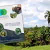 Instituto realiza publicação com orientações para cultivar Pomares de Mata Atlântica