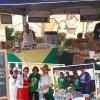 Festivais do Cambuci crescem com diversas novidades